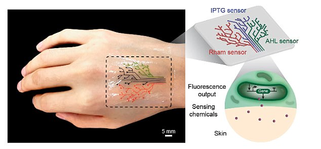 """研究人员推3D打印""""活纹身"""" 可感应环境变化"""