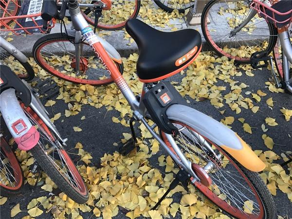 """不忍直视!共享单车被公然""""戴套"""":摩拜怒了"""