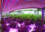 日本最大植物工厂关闭,中国LED企业机会来了?