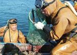 日本地下水监测污染严重 水产苯检测超标100倍