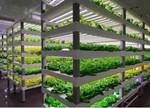 中科生物植物工厂栽培模组卖到美国