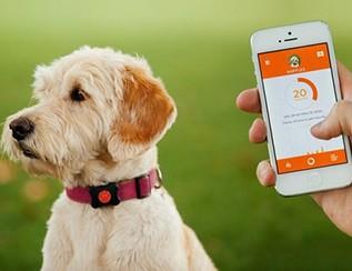 人不如狗:宠物们都用上了智能穿戴设备