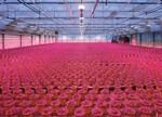 LED植物照明战场,国际巨头押宝哪些产品?