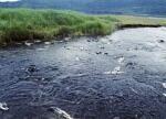 看不见的水污染更可骇 地下水污染容易修复难