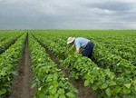 如何有效防治土壤污染问题?土壤专家解读