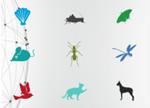 """学习动物""""超能力"""" 3D打印成科技新星"""