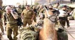 以色列用机器人取代忠实的羊驼向战场运货物