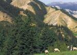 祁连山生态环境事件背后:环境治理本质问题待解