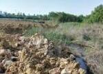 巢湖水域高温与恶臭并存 中央环保督查严责