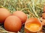 """""""毒鸡蛋""""持续发酵 食品安全全球护卫"""