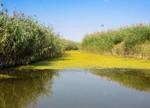 白洋淀水污染治理成环保公司必争市场 谁在暗中布局雄安新区?