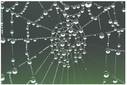 受蜘蛛网启发,糖尿病治疗有了重要突破