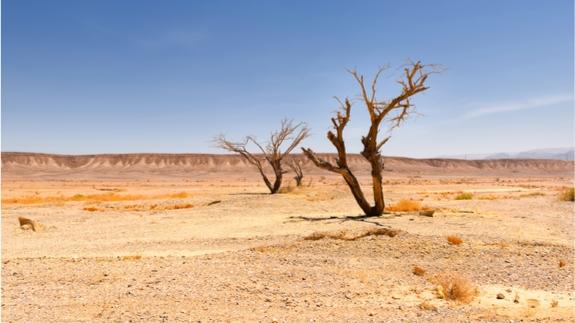 联合国:气候变化或导致全球1/4地表干涸