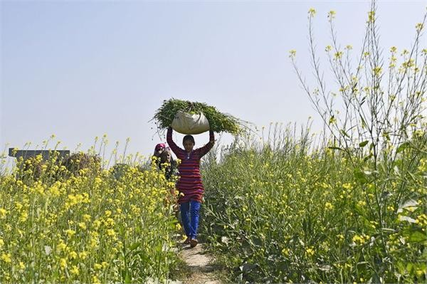 2018年印度重点倾斜农业 有人欢喜有人愁
