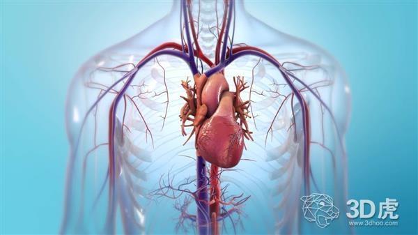 BIOLIFE4D与西北大学合作开发可移植的生物3D打印心脏器官