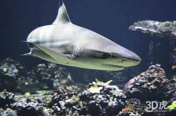 受鲨鱼启发的3D打印结构为下一代无人机、飞机和涡轮机铺平了道路