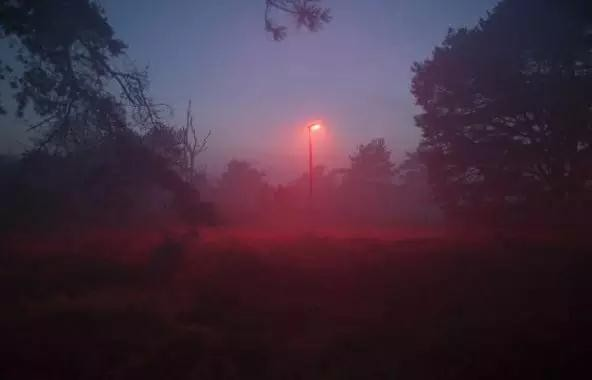 """荷兰地方政府为保护蝙蝠设""""红光""""路灯引争议"""