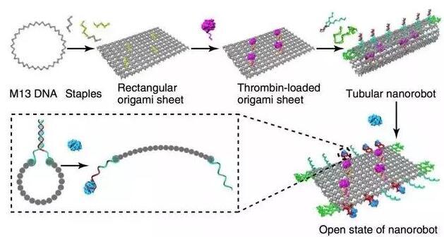 DNA纳米机器人成功狙击癌细胞