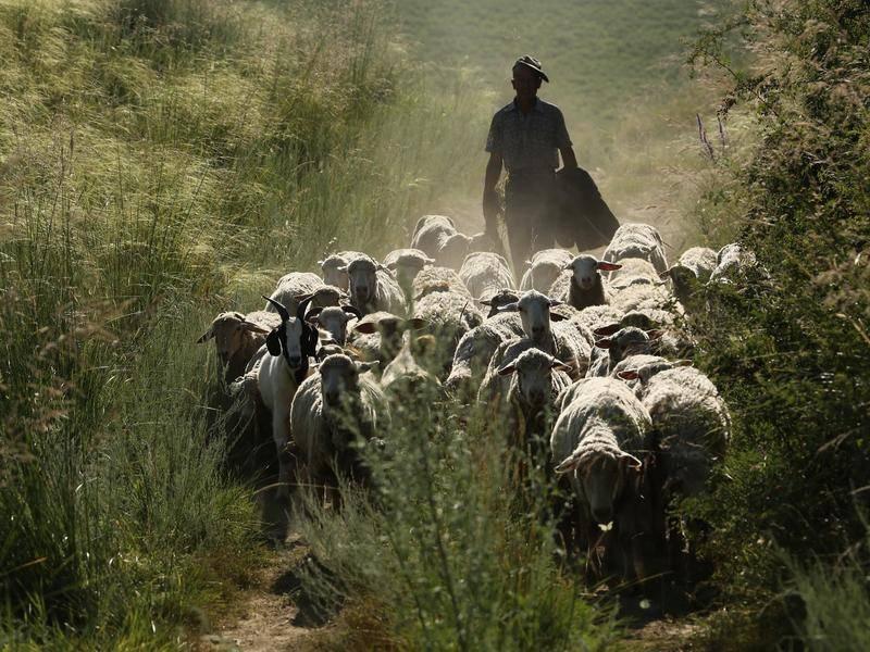 你需要区块链来帮你数羊吗?