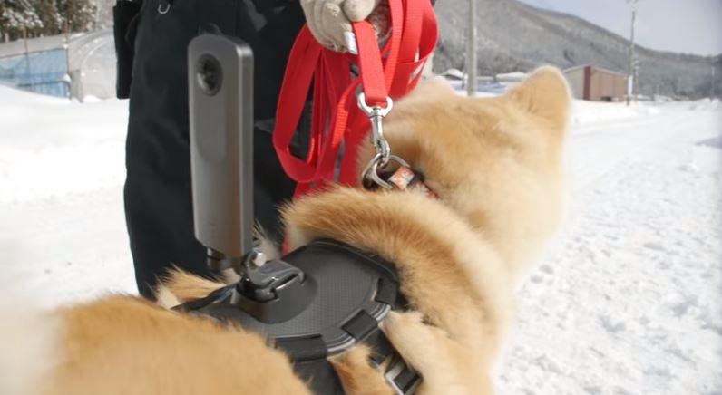 秋田犬视角:谷歌日本推出狗视角街景地图