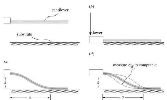 美国布朗大学开发出新的黏附力测量方法