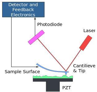 美国布朗大学研发新的黏附力测量方法