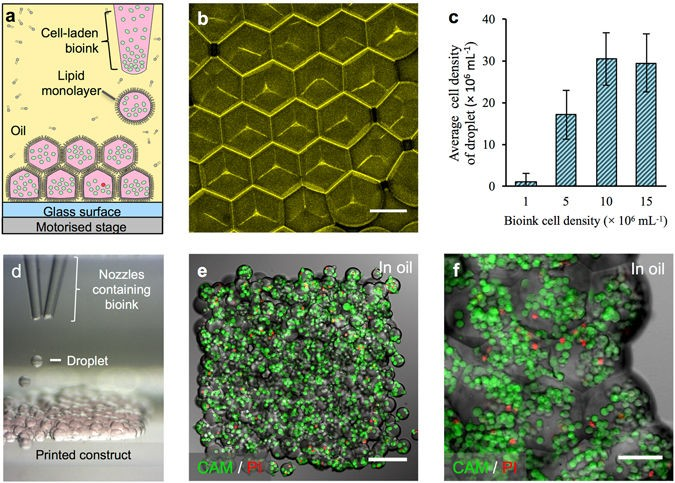 OXSYBIO使高分辨率组织3D生物打印成为可能