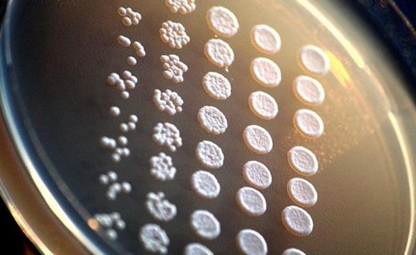 """科学家正在利用细胞生物学,破解人工智能""""黑匣子"""""""