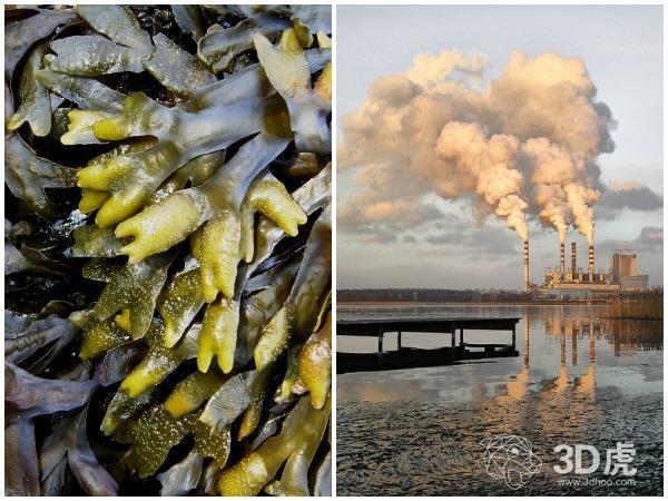 3D打印海藻来源的材料可吸附污染物 效率高达94%