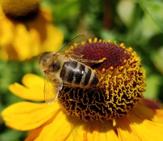 沃尔玛申请自动飞行机器人蜜蜂专利