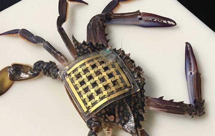 """海洋皮肤""""可穿戴技术可追踪水下生物"""