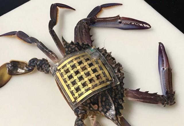 """新型""""海洋皮肤""""传感器问世 非侵入性追踪水下生物"""