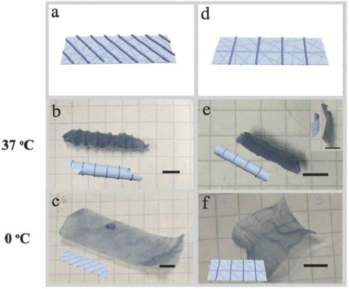 3D打印与静电纺丝相结合,实现快速响应和增强水凝胶致动器的可设计性