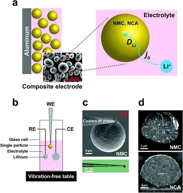 锂电:单粒子测量锂离子电池的NMC和NCA阴极的电化学动力学