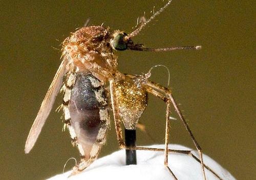 """中国用军事雷达向蚊子""""宣战"""" ,新技术或可用于救人"""