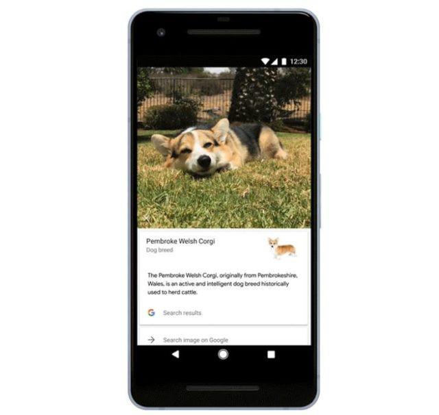 云养猫的福利 谷歌镜头现在可以识别猫狗的品种