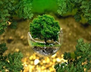 中国将建2000万公顷国家储备林