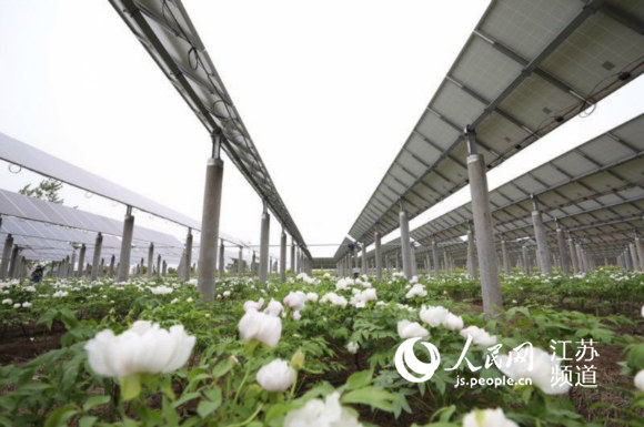 协鑫新能源:聚力扶贫再升级 光伏牡丹开新篇
