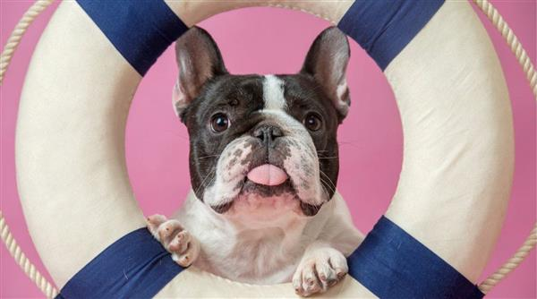 AI帮你预测狗狗行为 不再担心被狗狗智商碾压