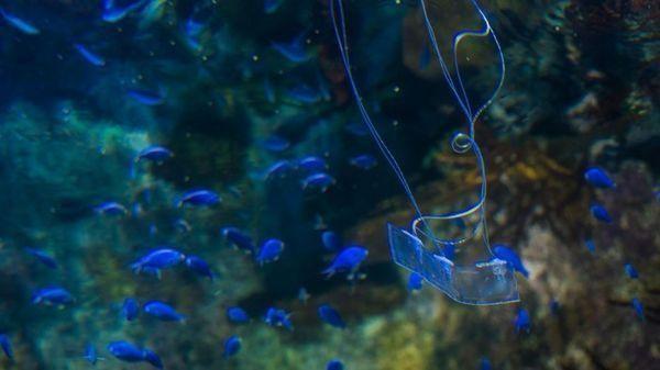 类似鳗鱼的安静型柔性机器人可以潜入鱼群