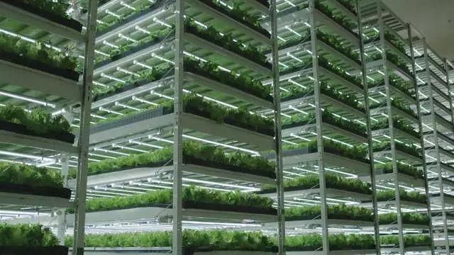 日本这家植物工厂破产重生 还在中国建了一家工厂