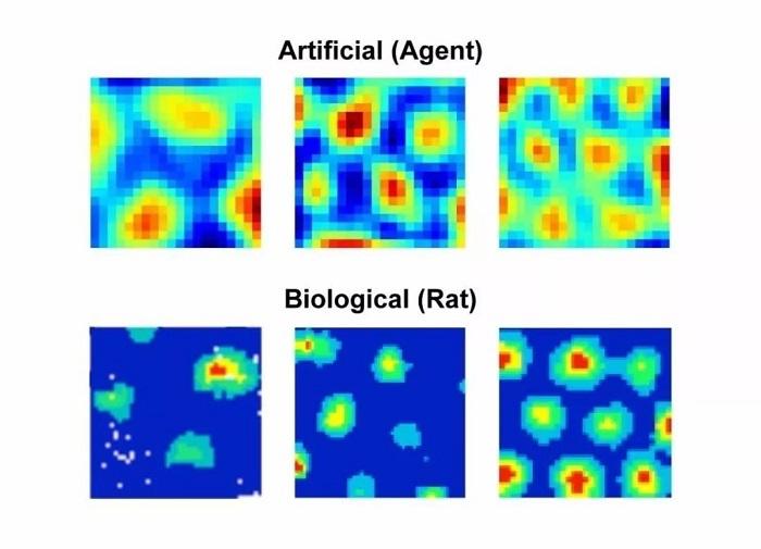 """AI替科学家搞定""""网格细胞"""",要抢诺贝尔奖?"""