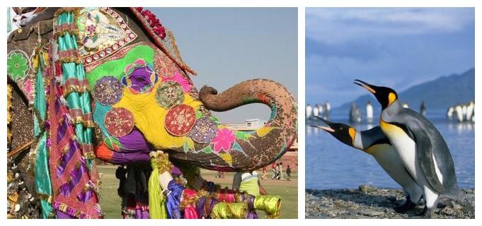 企鹅吞象:落子十大领域,腾讯全面布局印度