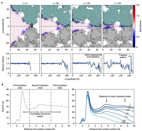 对动力学纳米多孔蛋白质组件熵驱动自由能图景的调控