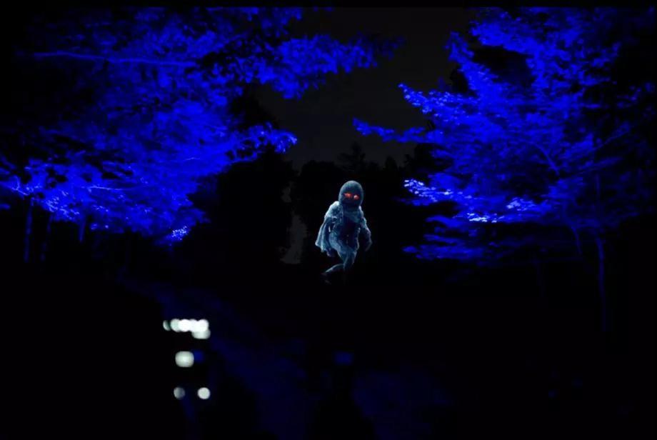 灯光与森林结合将带来何种体验?恩施将诞生中国首家幻光森林