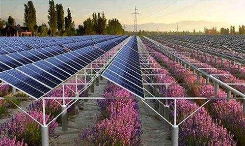 上面发电下面育苗 超3千亩荒山荒地变废为宝