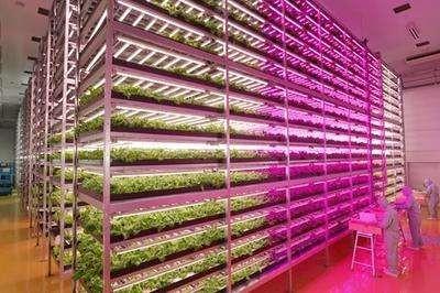 智能生长灯可助室内农业实现更高盈利
