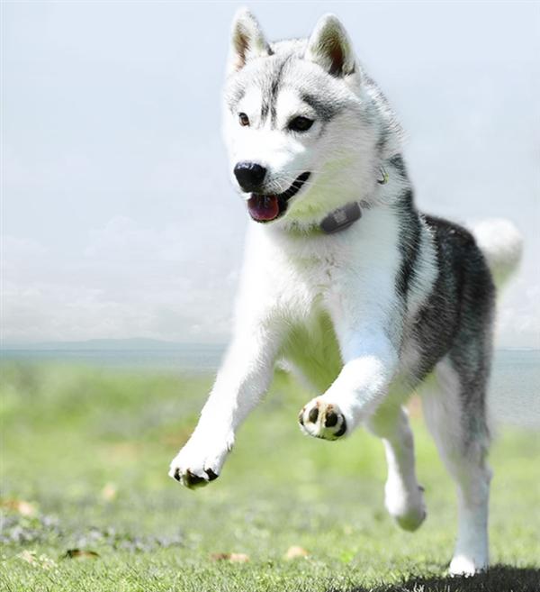 小米众筹上架宠物狗狗定位器:30天续航