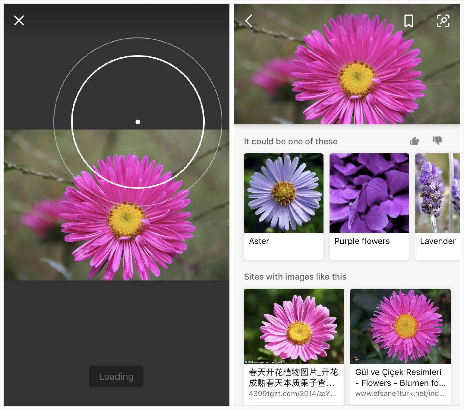 不用羡慕Google Lens,微软在Bing中也加入了AI视觉搜索的功能