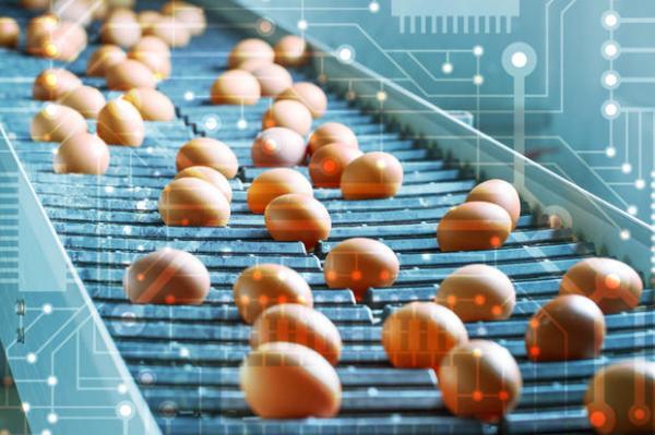 通过区块链技术确保食品安全、质量和透明度